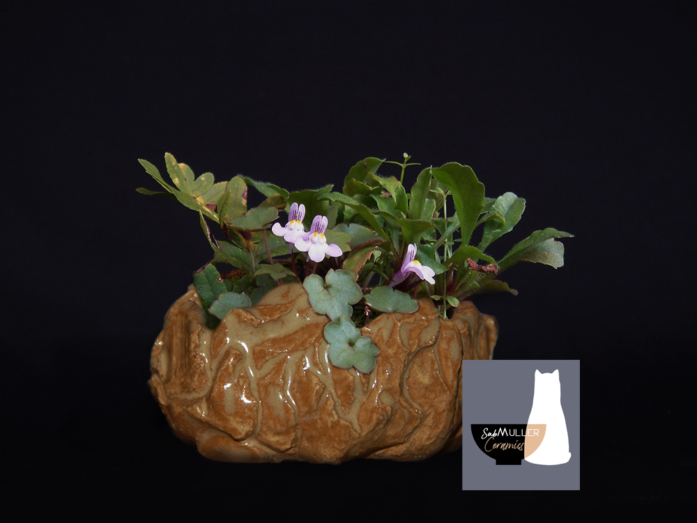 pot-terrain-cymbalaria-paquerette-fougere-2